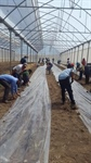 The Palestinian International cooperation Agency implements an agricultural development programme in the Republic of Nicaragua